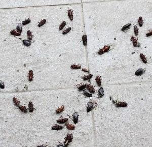Scarafaggi in casa cosa fare news - Piccoli insetti in casa ...