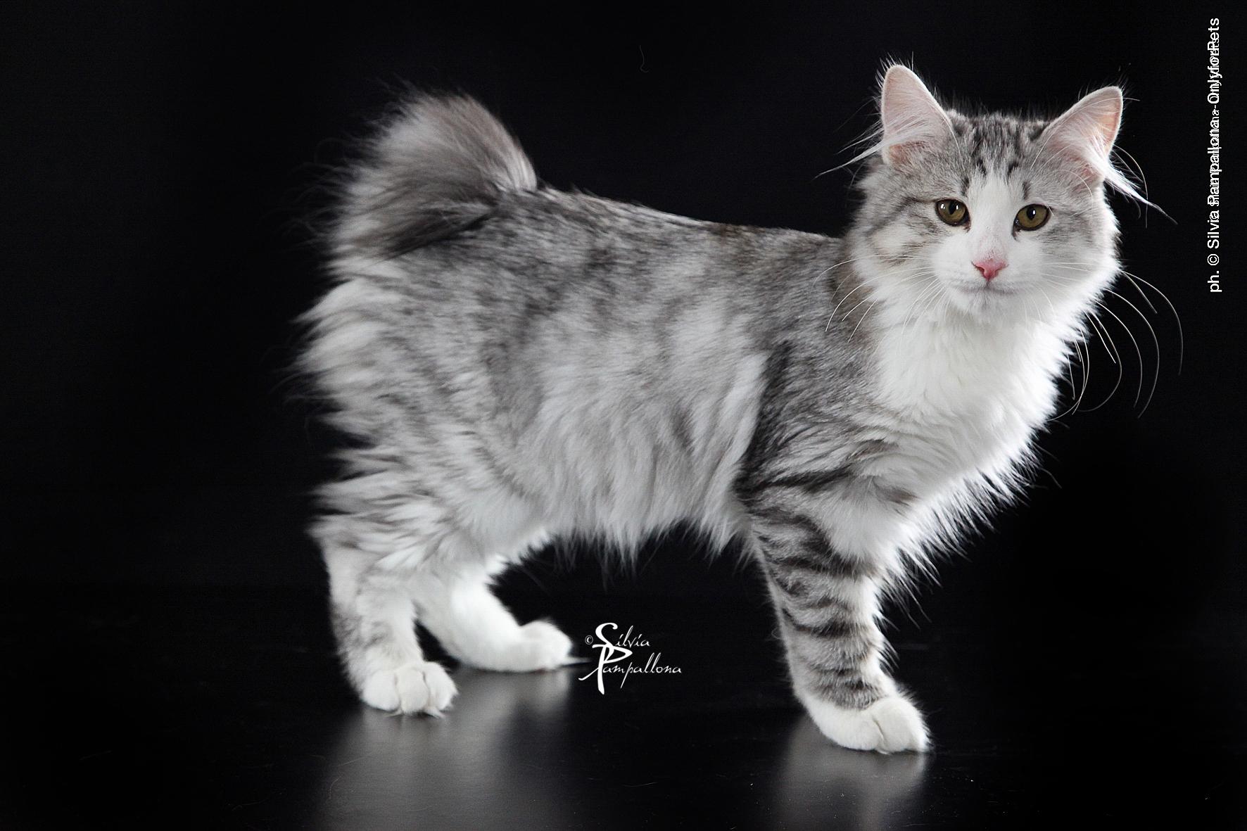 A firenze in mostra i gatti pi belli del mondo il 25 e il - Le fiere piu importanti nel mondo ...