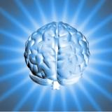 14-22 Marzo 2010. Settimana Mondiale del Cervello, Perugia in prima fila