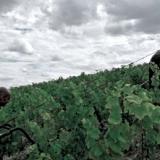 L'eccellenza vinicola italiana e francese alla Rocca di Fontanellato