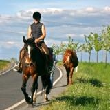 Guida all'Equitazione