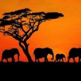 Una vacanza in Sudafrica ti cambia la vita