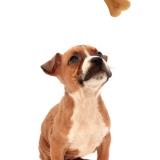 L'energia è assicurata con i biscotti per cane di Aquazoomania