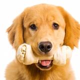 Nascondino con i giochi per cane di Aquazoomania