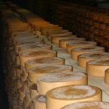 Fontina Dop Bio:  negli ultimi mesi la produzione è aumentata in quantità e in qualità, grazie a importanti innovazioni.