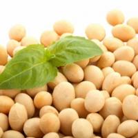 Carenza di ferro: come prevenirla nella dieta vegetariana
