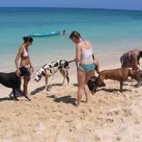 Le spiagge salentine non tutelano i cani né i loro padroni