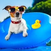 Cane bagnino, quale razza è più adatta?