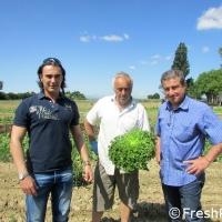 SIPO coltiva le insalate di Romagna e amplia i terreni agricoli coltivati