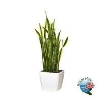 Vendita piante on line, acquisti sicuri e consegna a domicilio con Italian Flora.