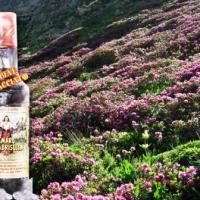Sconosciute ricercatezze locali: l'Amaro Calabrisella, un secolo e passa di squisitezza.