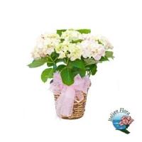 Vendita piante, scegli le varietà giuste per ogni ambiente su piante.italianflora.it