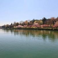 Daiichi Sankyo: contemplazione dei ciliegi in fiore nel Parco EUR a Roma