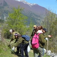 """Ponte del 2 giugno """"green e low-cost"""" con Inachis al Parco Nazionale d'Abruzzo, Lazio e Molise"""