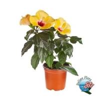 Vendita piante Italian Flora: scegli le più belle per i tuoi balconi