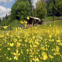 Festa delle erbe di primavera
