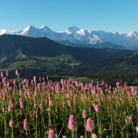 Interlaken: vacanze da sogno tra i due laghi