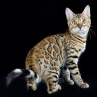 Torna Fantasticat Siena: al via la seconda edizione della Expo Felina Internazionale