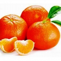 Delizie di periodo: le clementine della Piana di Sibari, quei fantastici mandaranci