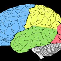 Rigenera il cervello con la Whitania