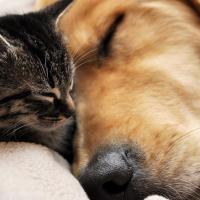 Tuttotrovet, un nuovo store dedicato a cani e gatti con patologie