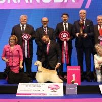 UN ALLEVATORE DI AMERICAN COCKER SPANIEL DIVENTA CAMPIONE DELL'EUKANUBA WORLD CHALLENGE
