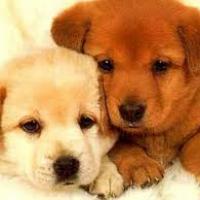 Uomo-cane...un' amicizia unica!!!