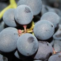Alla scoperta del Vino di Verona