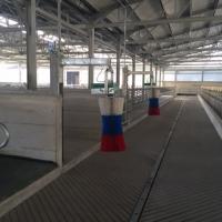 AGRICOW sceglie ELATOS per la gestione dei processi aziendali
