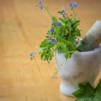 Fitoterapia: la terapia delle piante medicinali