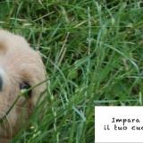 il mio cucciolo ringhia: puppyclass è la risposta giusta per te