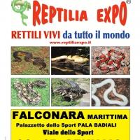 REPTILIA EXPO - L'affascinante mondo dei rettili ...arriva ad ANCONA