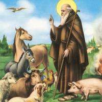 Cori festeggia Sant'Antonio Abate