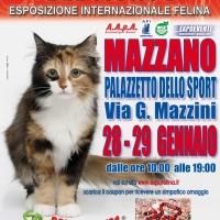 I GATTI PIU' BELLI DEL MONDO in passerella al Palasport di MAZZANO (Brescia)