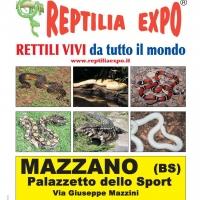 REPTILIA EXPO - L'affascinante mondo dei rettili A brescia  presso il Palazzetto dello Sport di MAZZANO !