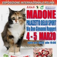 I Gatti Più Belli del Mondo e i Rettili più Affascinanti in mostra al Palazzetto dello Sport di MADONE (BG) -- 4 e 5 Marzo
