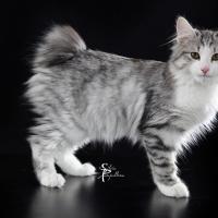 A Firenze in mostra i gatti più belli del mondo il 25 e il 26 marzo