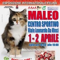 I Gatti Più Belli del Mondo e i Rettili più Affascinanti in mostra al Palazzetto dello Sport di MALEO (LO) -- 1 e 2  Aprile