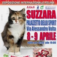 I Gatti Più Belli del Mondo e i Rettili più Affascinanti in mostra al Palazzetto dello Sport di SUZZARA (MN) -- 8 e 9 Aprile