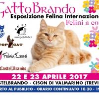 Gattobrando Felini a Corte - Esposizione Felina Internazionale