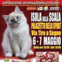 Gatti & Rettili in una accoppiata davvero singolare, a ISOLA DELLA SCALA (Verona)