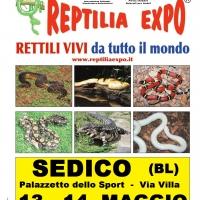 REPTILIA EXPO - L'affascinante mondo dei rettili ...al Palazzetto dello Sport di SEDICO (Belluno)
