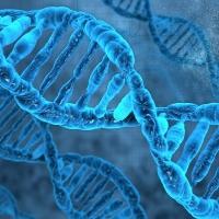 Cancro ereditario ed esami genetici: i pericoli delle alterazioni ai geni BRCA