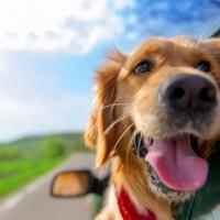 Assicurazioni da viaggio…per gli animali