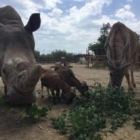 """Agosto allo Zoo d'Abruzzo, per conoscere ed amare gli animali, alla scoperta dei nuovi cuccioli, con un team esclusivo. Assegnato nell'ambito del """"Premio Simpatia"""" di Montesilvano, riconoscimento d'eccellenza."""
