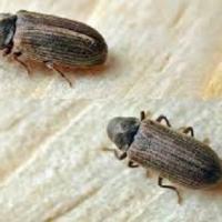 Combattere gli acari del legno: bastano i rimedi naturali?