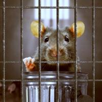 Glorenza, la leggenda del borgo che processò i topi