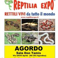 REPTILIA EXPO - L'affascinante mondo dei rettili a AGORDO dal 22 al 28 Agosto