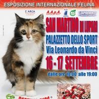I Gatti Più Belli del Mondo e i Rettili più Affascinanti in mostra al Palazzetto dello Sport di SAN MARTINO DI LUPARI (Padova)