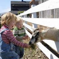 Il Trentino Alto Adige è la regione più attrezzata per soggiorni family-friendly in agriturismo